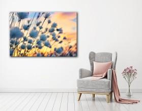 COTTON GRASS - obraz na płótnie