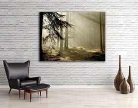 Lasowe słońce - obraz na płótnie