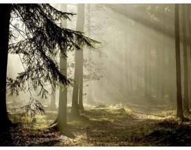 Lasowe słońce - obraz na płótnie - grafika