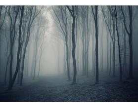 Las w mgle - obraz na płótnie - grafika
