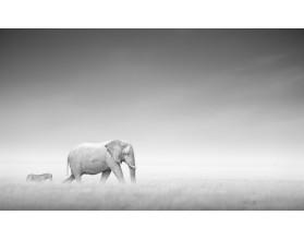 Słonie w mgle- obraz na płótnie - grafika
