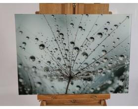 WYPRZEDAŻ! ROSA NA DMUCHAWCU - hartowany panel szklany 56,2x40 - grafika