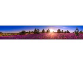 KWITNĄCE ŁĄKI - panorama - obraz na szkle - grafika